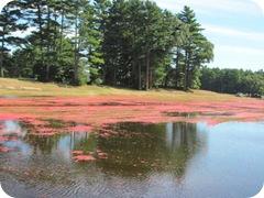 bog sea of red4