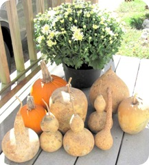 gourds mine w pumpkins flower1