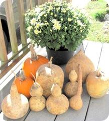 gourds mine w pumpkins flower1