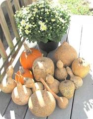 gourds mine with pumpkins flower2