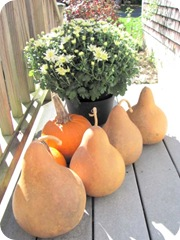 gourds big ones from ca