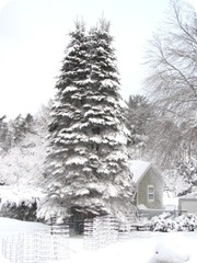 1.27.11 snowstorm1