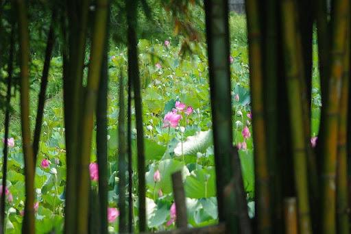 2010-08-01-湖口長安荷花F100試鏡