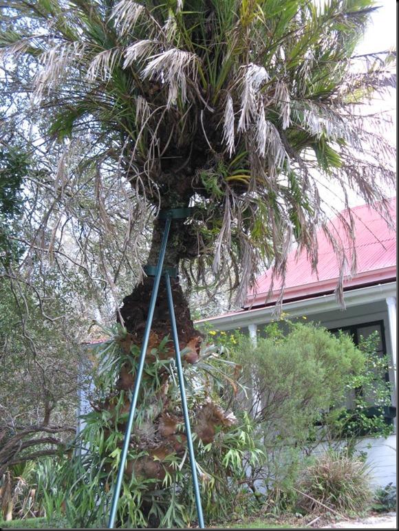 clendon house tree