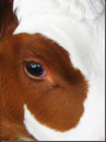 cropped eye