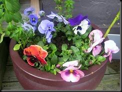 in a pot
