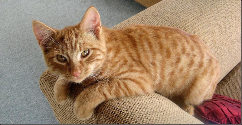 kitten24apr11