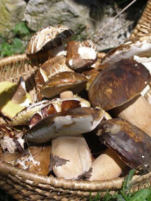 Mushroom, Funghi, Porcini Italy Le Marche, La Tavola Marche Agriturismo & Cooking School