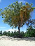 nomad4ever_indonesia_sulawesi_pulau_gangga_CIMG2595.jpg