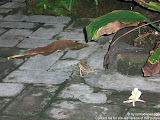 nomad4ever_indonesia_bali_life_CIMG2009.jpg
