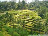 nomad4ever_indonesia_bali_landscape_CIMG1852.jpg