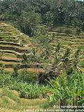 nomad4ever_indonesia_bali_landscape_CIMG1856.jpg