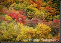 Beautiful Fall Colors of Jiuzhaigou, Sichuan, China (2)