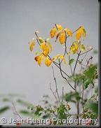 Beautiful Nature - Zhangjiajie, Hunan, China (2)