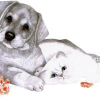 CatDog's5.jpg