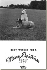 Holiday Card_Dogs (Medium)