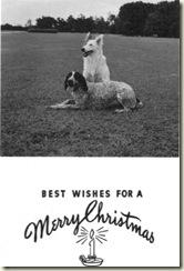 Holiday Card_Dogs (Medium)