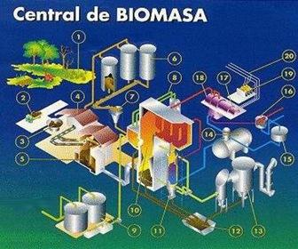 biomasa-transformación-energetica