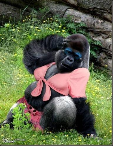 trendy gorilla