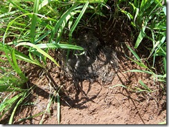 rabbit nest 001