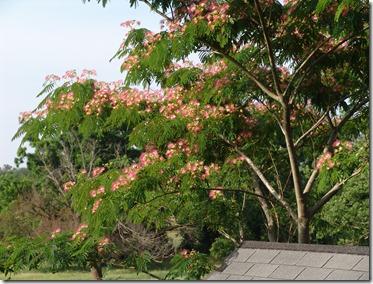 Jackass and garden photos 6.8.2010 044