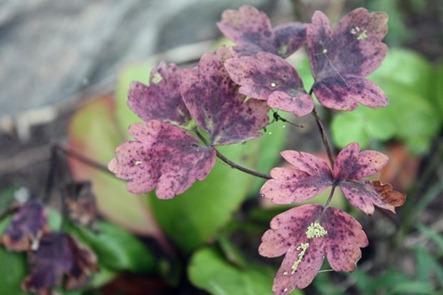 blomst1[1]
