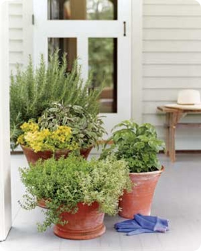 potted herbs, real simple