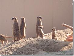 köln zoo 018