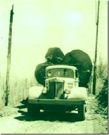enormes árboles talados cosasdivertidas (5)