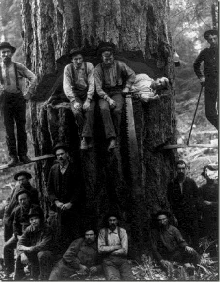 enormes árboles talados cosasdivertidas (6)