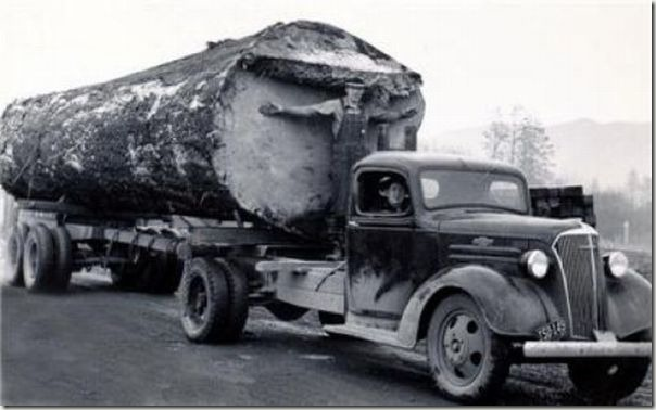 enormes árboles talados cosasdivertidas (7)