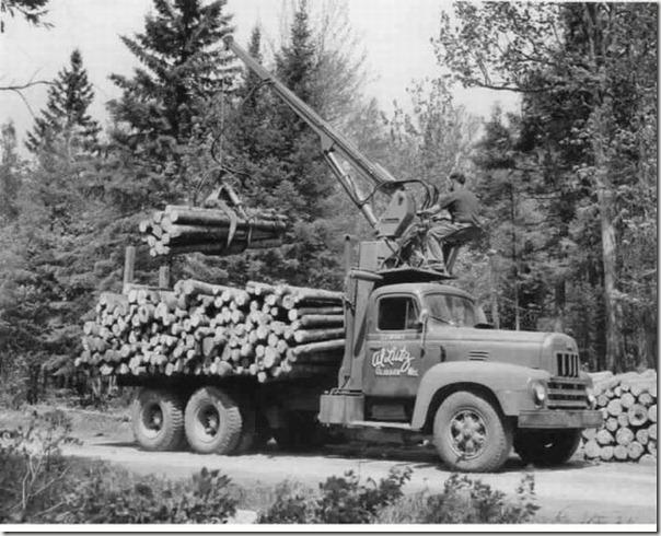 enormes árboles talados cosasdivertidas (8)