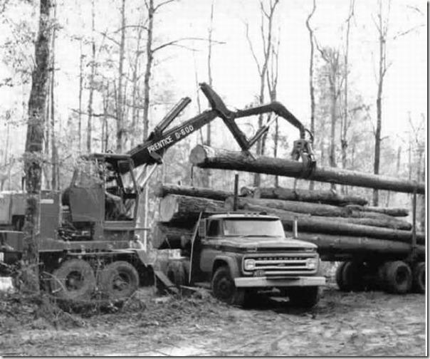enormes árboles talados cosasdivertidas (12)
