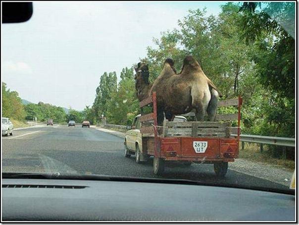 transporte de mercancias cosasdivertidas (8)