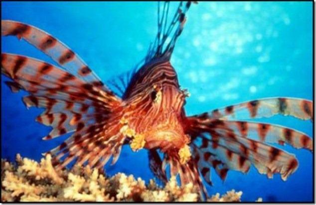 caras de pez casi humana migallinero (116)