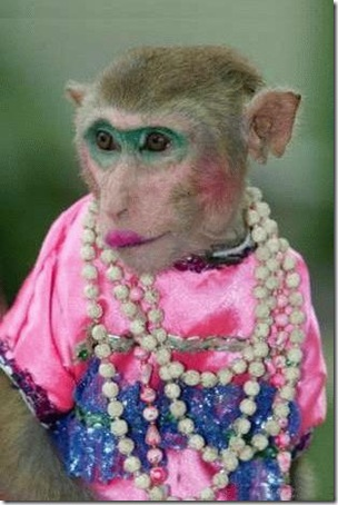 drag_queen_monkey_b