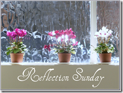 Reflection Sunday