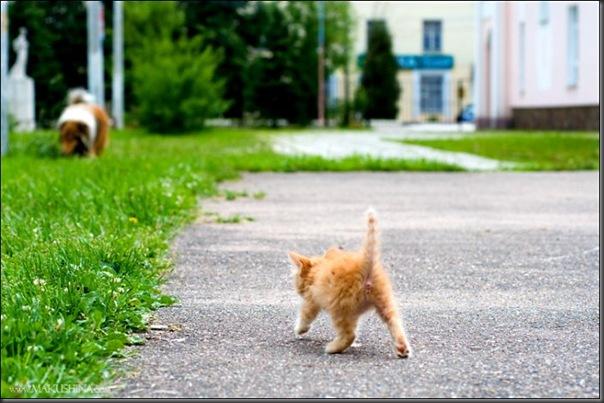Encontro de um gatinho e um cachorro (12)
