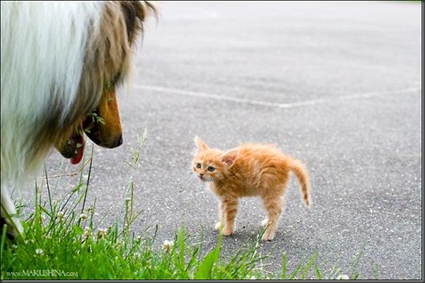 Encontro de um gatinho e um cachorro (2)