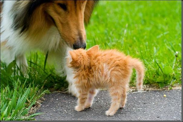 Encontro de um gatinho e um cachorro (3)