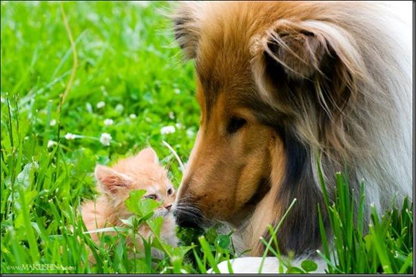 Encontro de um gatinho e um cachorro (5)