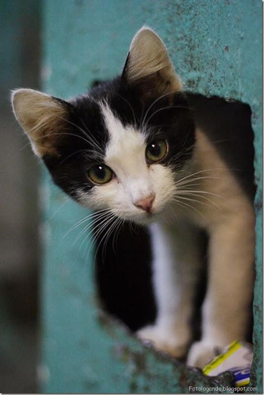 momento oinn especial gatos (108)