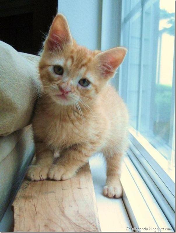 momento oinn especial gatos (101)