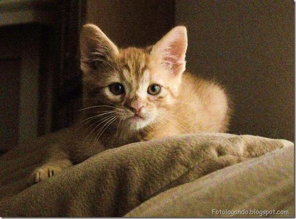 momento oinn especial gatos (100)