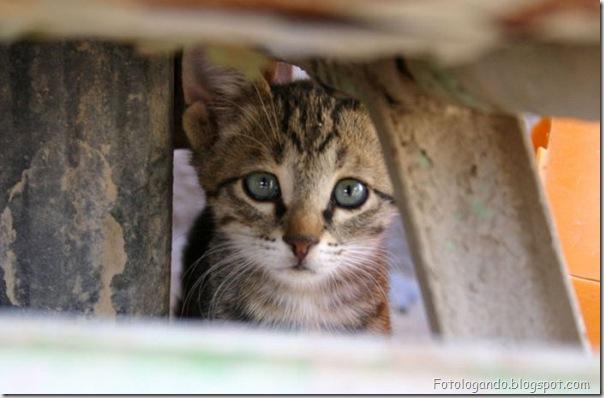 momento oinn especial gatos (86)