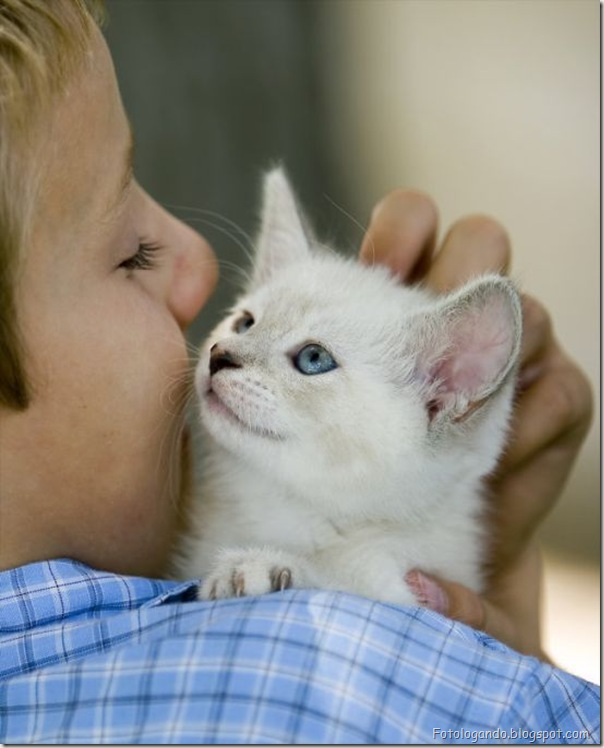 momento oinn especial gatos (85)
