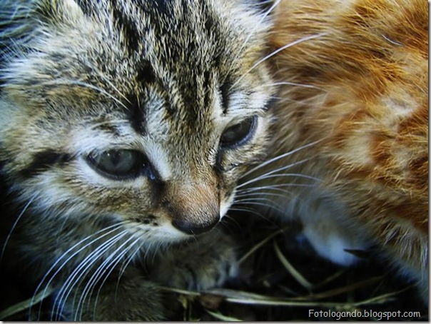 momento oinn especial gatos (73)