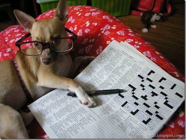 Animais de Oculos (21)