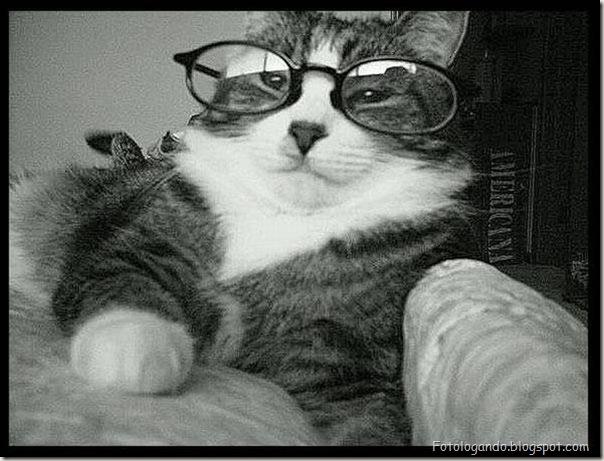 Animais de Oculos (17)