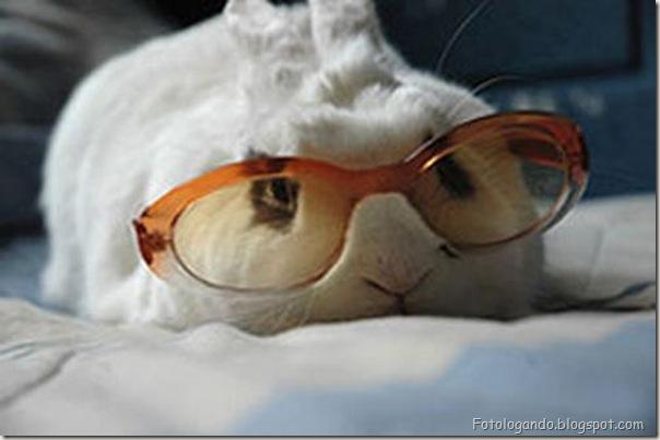 Animais de Oculos (10)